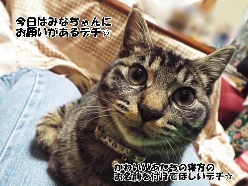 DSCF0133_2015011222325429b.jpg