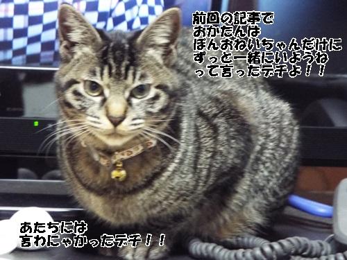 DSCF0519.jpg