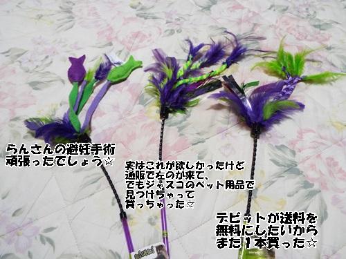 DSCF0795.jpg
