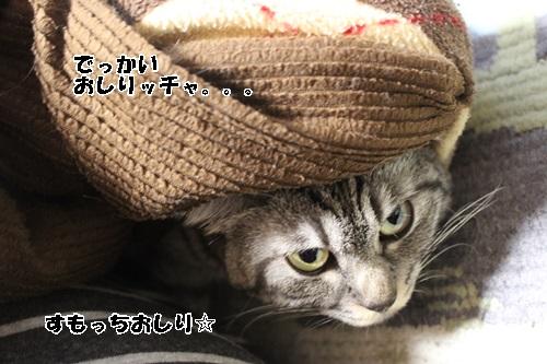 IMG_5954_20150104223812cdf.jpg