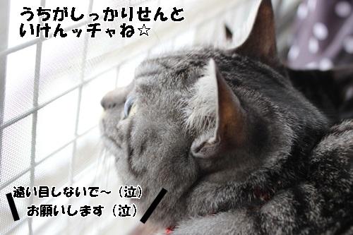 IMG_6544.jpg