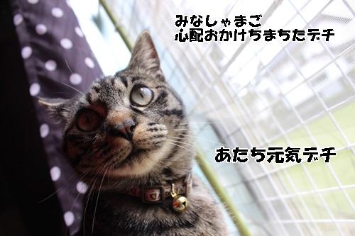 IMG_7170_201504141849484ee.jpg