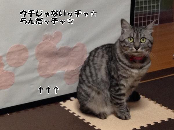 IMG_8667.jpg