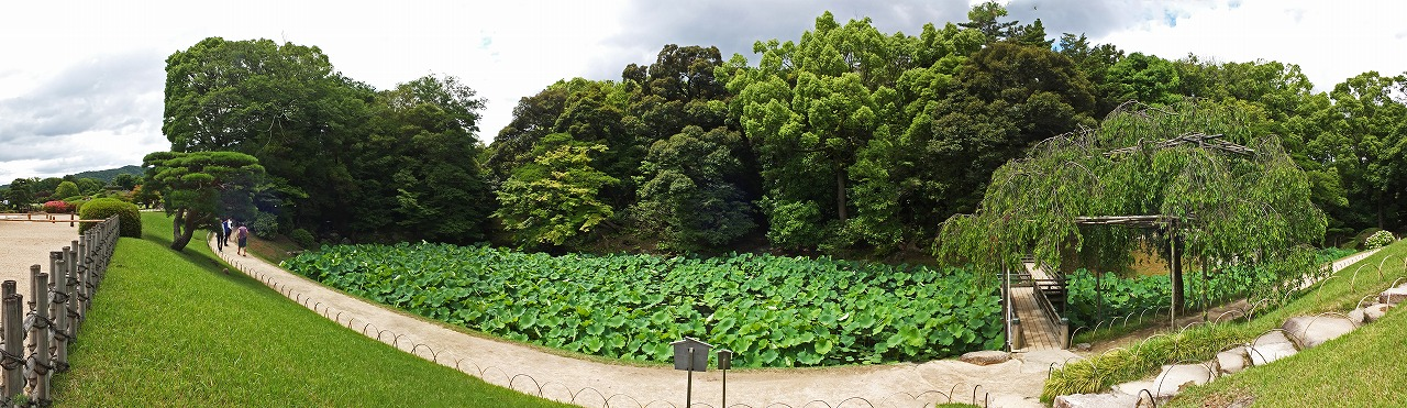 s-20150606 後楽園花葉の池の今日の様子ワイド風景 (1)