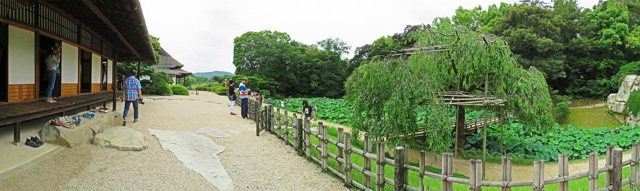 s-20150622 後楽園今日の栄唱の間開放日の花葉の池のワイド風景 (1)