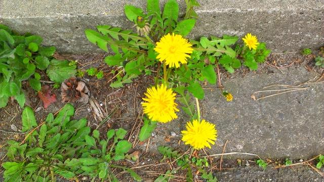 2015-04-14_16-40-33.jpg