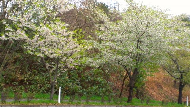 2015-04-21_09-32-52.jpg