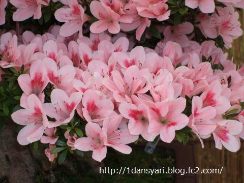 2015_4_18_satuki2.png