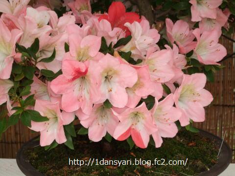 2015_4_23_satuki2.png