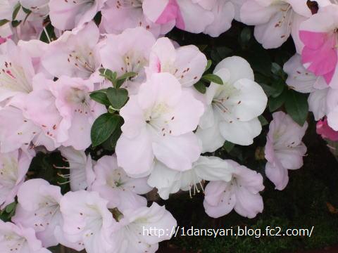 2015_4_26_satuki2.png