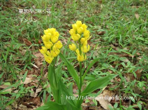 2015_5_01_kinran1.png