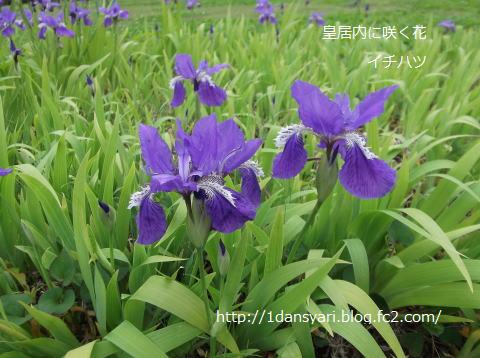 2015_5_03_itihatu1.png