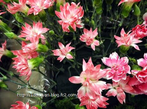 2015_5_08_carnation1.png