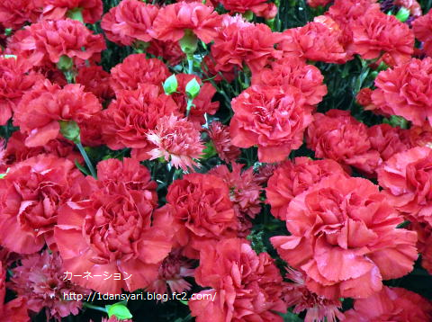 2015_5_09_carnation1.png