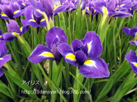 2015_5_11_airisu1.png