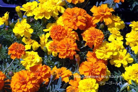 2015_5_19_hana1.png