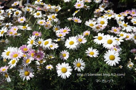 2015_5_20_hana1.png