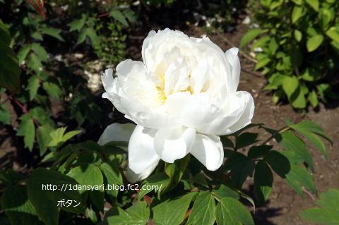 2015_5_22_botan1.png