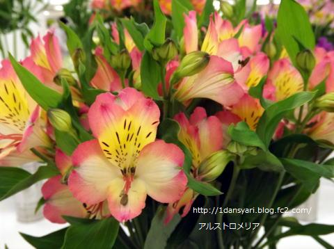 2015_5_28_arusutoromeria1.png