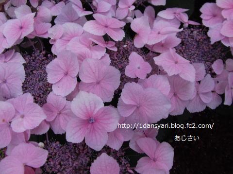 2015_6_08_ajisai1.png