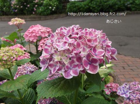 2015_6_10_ajisai1.png
