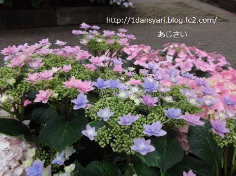 2015_6_12_ajisai1.png