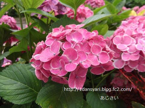 2015_6_13_ajisai1.png