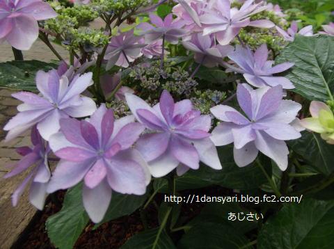 2015_6_16_ajisai1.png