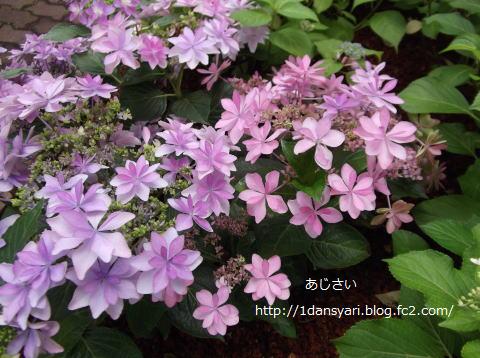 2015_6_23_ajisai1.png