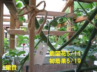 6・7トマト棚④
