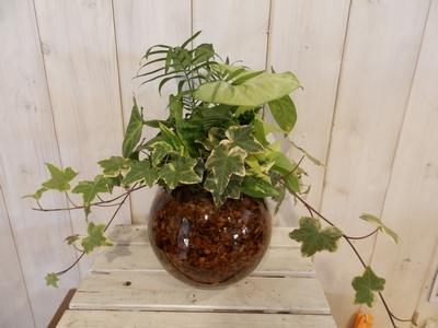 観葉寄せ植え ベラボン 丸花瓶