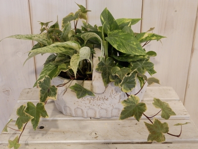 観葉寄せ植え ベラボン 陶器