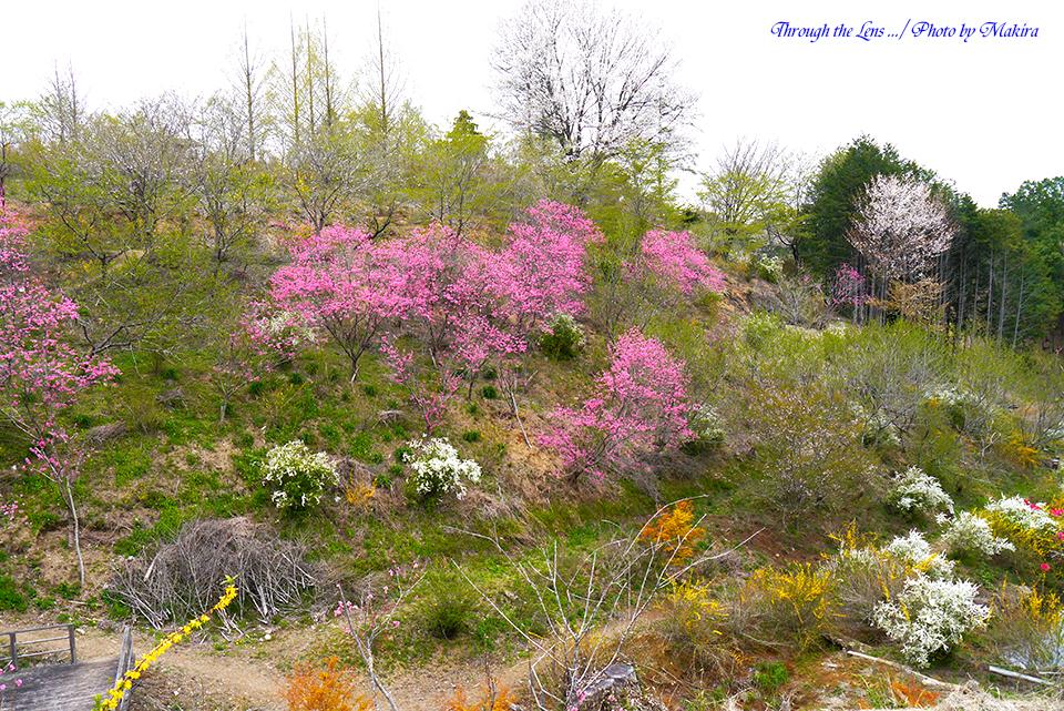 花の山L1