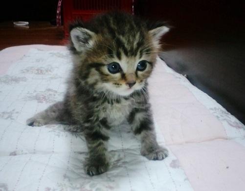 子猫ちゃん3