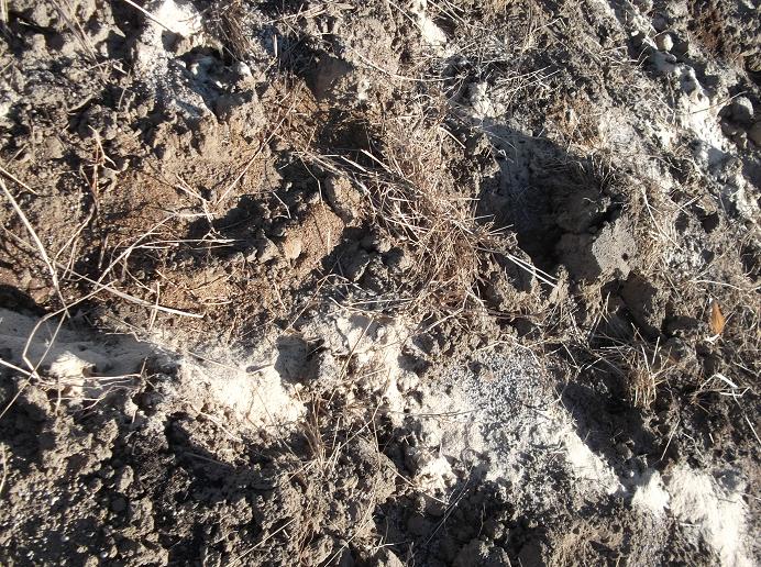 計55~60kgの肥料が、ただの表面的マダラに