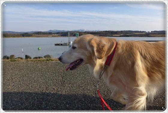 2015,1,16湖畔公園6