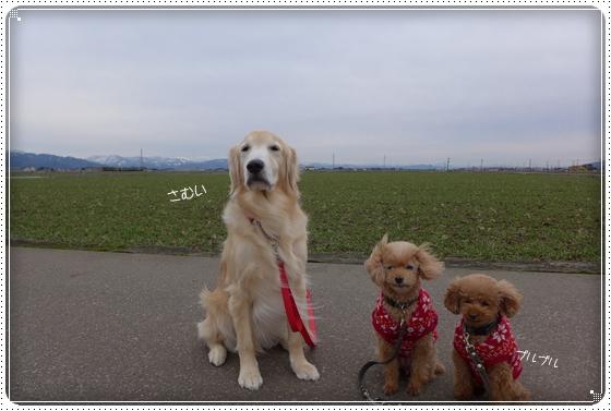 2015,1,29お散歩1