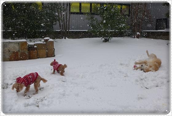 2015,2,9雪の日6