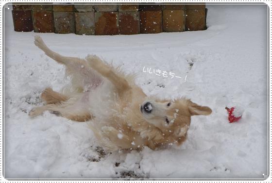 2015,2,9雪の日5