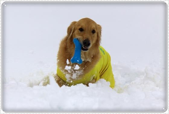 2015,2,11雪遊び4
