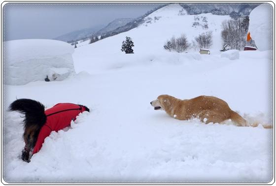 2015,2,12雪遊び2