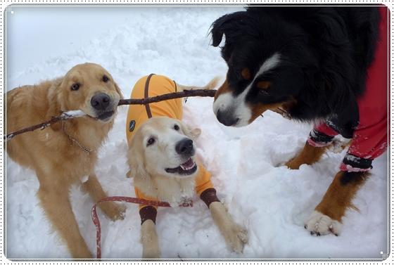 2015,2,12雪遊び11