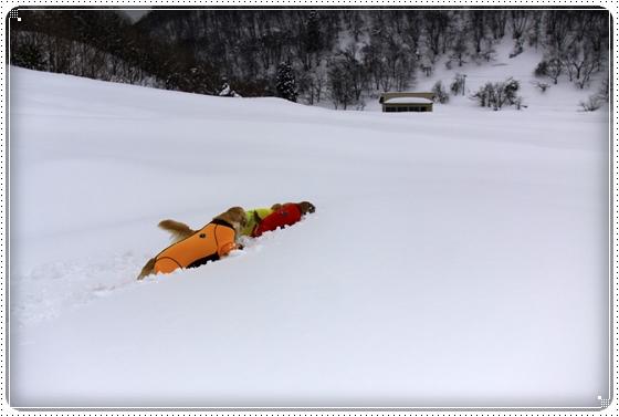 2015,2,12雪遊び8