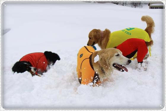 2015,2,12雪遊び9