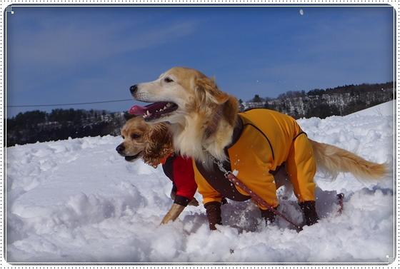 2015,2,22雪遊び8
