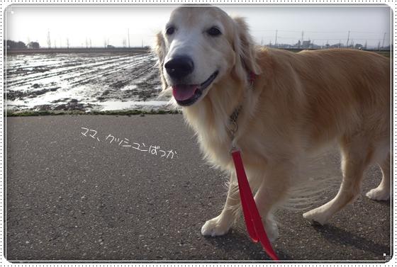 2015,2,25お散歩4