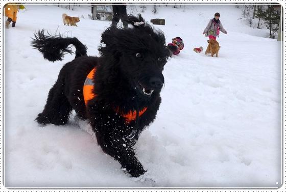 2015,3,9雪遊び4