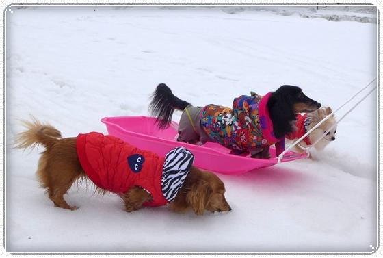 2015,3,9雪遊び9