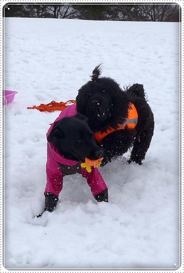 2015,3,9雪遊び14