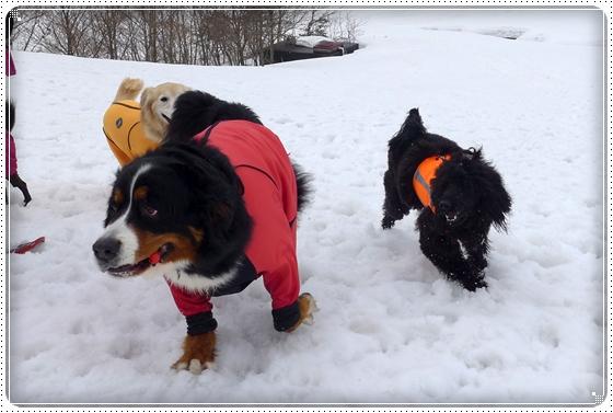 2015,3,9雪遊び23